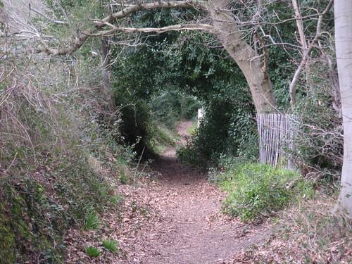 small-cowdray-castle-beech-alley