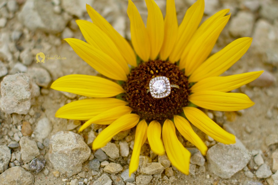 ringshotsunflower