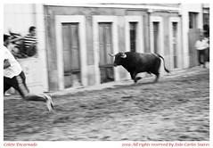 Colete Encarnado V.F. de Xira 2009 (Joo Carlos Soares) Tags: horses bw horse portugal caballo caballos fiesta carlos pb bull bulls bn cavalos 1855 bullfight cavalo 2009 corrida toro espera vfx joo jogos touro lusitano soares tauromaquia largada campino lusitanos iberico iberic campinos touros cabresto vilafrancadexira vfdexira toiro vfxira 450d cabrestos toiros coleteencarnado festabrava coleteencarnado2009 jogosdecabrestos