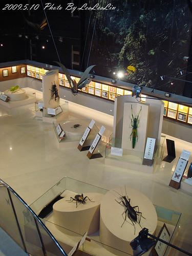 嘉大昆蟲館|嘉義大學|嘉義蘭潭景點