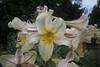 DSC_0006-5 (frankps) Tags: flower tøyenhagen tøyenbotaniskehage