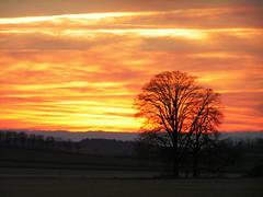 el mar rojo...  en el cielo (SSyyRR) Tags: sunset tree arbol atardecer bayern baum baviera blueribbonwinner otw platinumphoto anawesomeshot flickrdiamond thatsclassy perfectsunsetssunrisesandskys saariysqualitypictures topcso