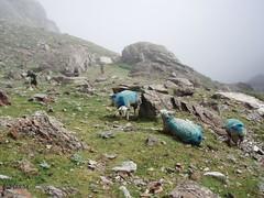 Grand Raid des Pyrenees Ultra 2009 (397)