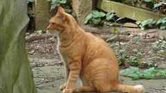 Cat in Yanaka Cemetery Tokyo