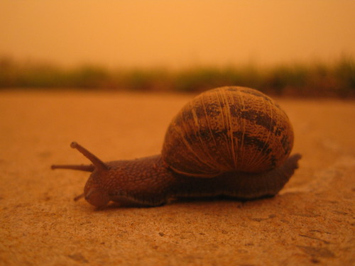 Snail in the Dust storm
