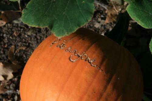 pumpkin2009 036 (500 x 333)