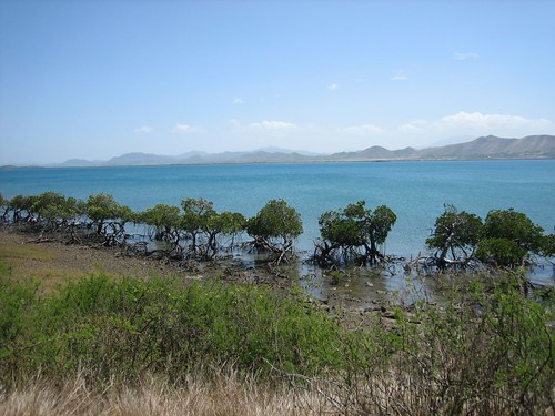 Mangroves on the shore of Ile Puen