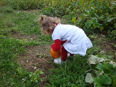 Lilliann Finding The Perfect Pumpkin