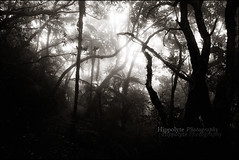 Entre ombres et lumires :: Dimitile (hippolyte photography) Tags: bw white black canon magic jungle 24mm ambiance mystere reunionisland hippolyte dimitile 5dmk2