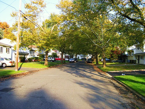 same trees, every street.