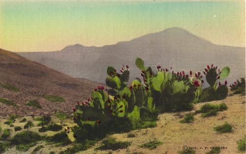 Desert Prickly Pear