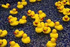 Nostalgia (Mona Hura) Tags: county carnival water yellow toy duck florida ducks fair rubber nostalgia prize interstate win float pensacola pensacolaflorida escambia pensacolainterstatefair 6562