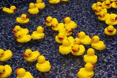 Nostalgia (Mona Hura) Tags: county carnival water yellow toy duck florida ducks fair rubber nostalgia prize interstate win float pensacola pensacolaflorida escambia pensacolainterstatefair 6562