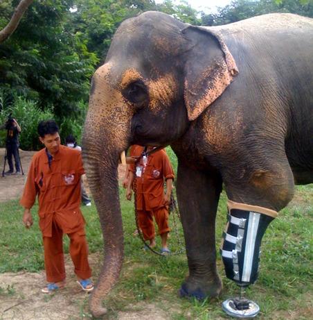 Elephant Prosthetic