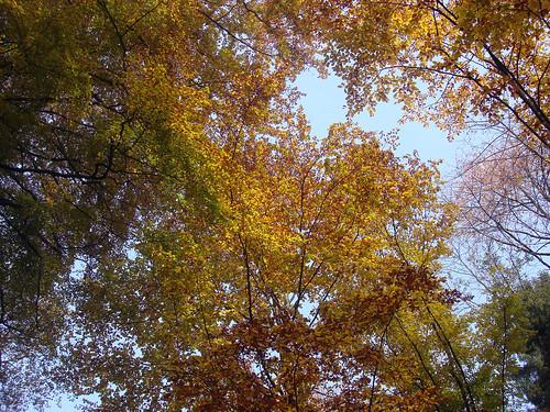Herbstfarben Wunderklingen/Hallau 1.11.09