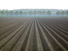 Dutch landscape (Frans.Sellies) Tags: holland netherlands landscape potatoes nederland thenetherlands paysbas olanda hulanda almere niederlande kartoffeln  hollandia   holandia hollanda aardappels akker pasesbajos pasesbaixos   alankomaat  almerehout   dscf9121 nizozemsko  nyderlandai      nderlande