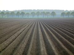 Dutch landscape (Frans.Sellies) Tags: holland netherlands landscape potatoes nederland thenetherlands paysbas olanda hulanda almere niederlande kartoffeln  hollandia   holandia hollanda aardappels akker pasesbajos pasesbaixos   alankomaat  almerehout   dscf9121 nizozemsko  nyderlandai      nderlande