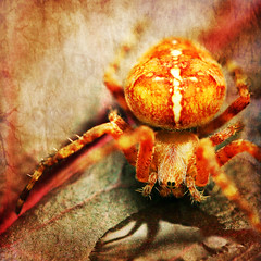 you talkin' to me? (1crzqbn) Tags: sunlight color macro nature water reflections square spider leaf shadows bokeh textures 7d ie araneusdiadematus hcs youtalkintome coth sweetfreedom physis artdigital idream crossorbweaver macromarvels awardtree magicunicornmasterpiece 1crzqbn clichesaturday fakephotoeffectsscavengerhuntcliche travisbickletaxidriver