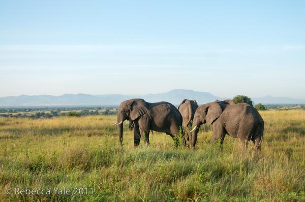 RYALE_Rwanda_Uganda_Safari-271