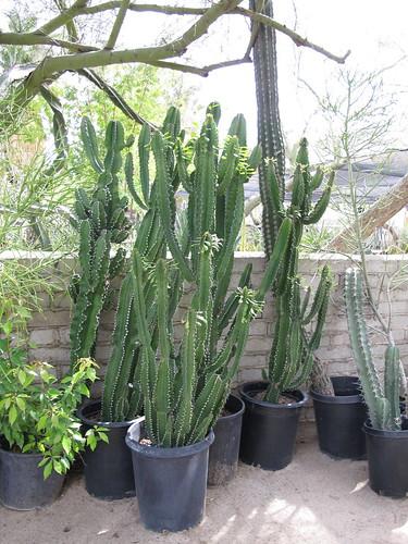 moorten cactus pots