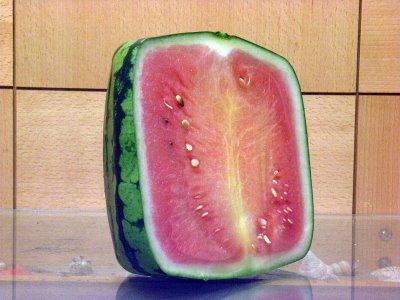 方形西瓜-2.jpg