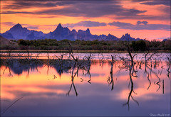 Sunrise on Topock Marsh (Dave Arnold Photo) Tags: pictures arizona usa lake southwest west canon river us photo desert image photos arnold picture az pic images photograph american swamp coloradoriver western getty sw marsh needles reflexions breathtaking southwestern ariz swusa westernusa davearnold flickrsbest perfectpicture flickrsilver greatimage topock mywinners abigfave flickrgold canonequipment peaceaward anawesomeshot flickrbronze canonphotographer canon40d theperfectphotographer goldstaraward breathtakinggoldaward colorsofthesoul universalelite artofimages yahttw platinumpeaceaward worldpeacehalloffame bestofmywinners lirodon tocpockmarsh davearnoldphoto davearnoldphotocom arnoldd rememberthatmomentlevel1
