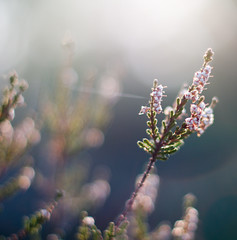 Spring Bokeh - Nature awakes (Xindaan) Tags: morning light vacation holiday plant flower color macro nature closeup germany square geotagged deutschland 50mm schweiz switzerland licht nationalpark spring flora nikon europa europe dof natural bokeh 14 saxony natur pflanze depthoffield sachsen mm nikkor 50 blte morgen 2009 nahaufnahme afs saxon frhling schsische 5014 d300 elbsandsteingebirge 114g platinumheartaward afs50mmf14g magicunicornverybest magicunicornmasterpiece todocherryontop