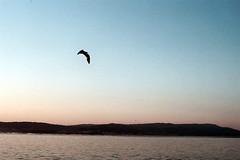 Sunset and seagull (Fjur) Tags: sunset sea summer film mar seagull playa olympus gaviota om1 pontevedra becah agrelo fjur ricardosamaniego