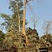 Cambodia-2540