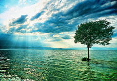The Lonely Tree (Emilijan Sekulovski) Tags: new blue sky sunlight lake tree green water clouds canon studio landscape design flickr estrellas ng generation emil ivo platinumheartaward emilijan sekulovski ngdesignstudio ngdesignstudiocommk