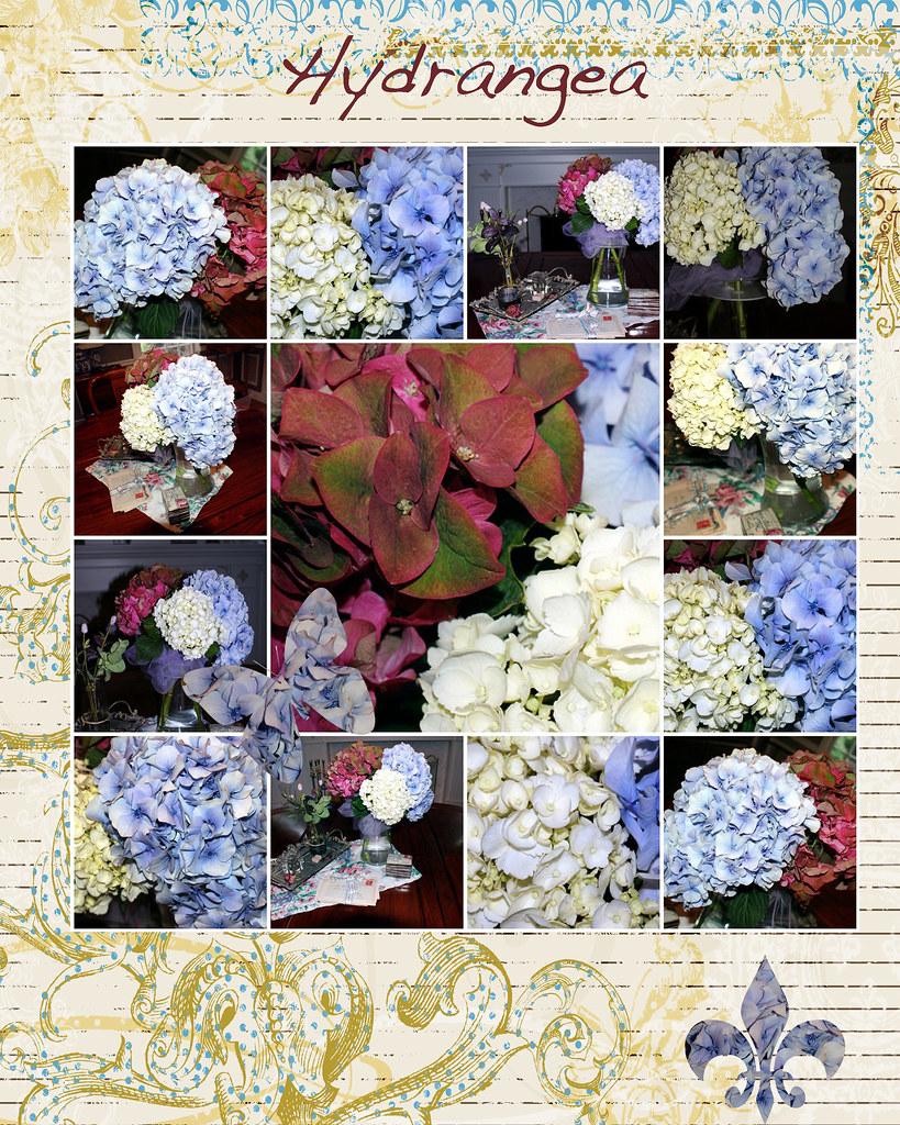 hydrangea-mosaic-monday-2