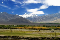 Indus Valley (Ladakh) (hibru) Tags: blue sky mountain haven clouds hp nikon sigma kashmir himalaya leh jk ladakh jule jammukashmir thepca lehladakh indusvalley jannat thiksegompa sigma18200os hibru transhimalayan pcabestof2009