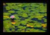 2009 06 17_Spania2009_0802_1 (Nbjorlo) Tags: flowers summer macro spain ashowoff