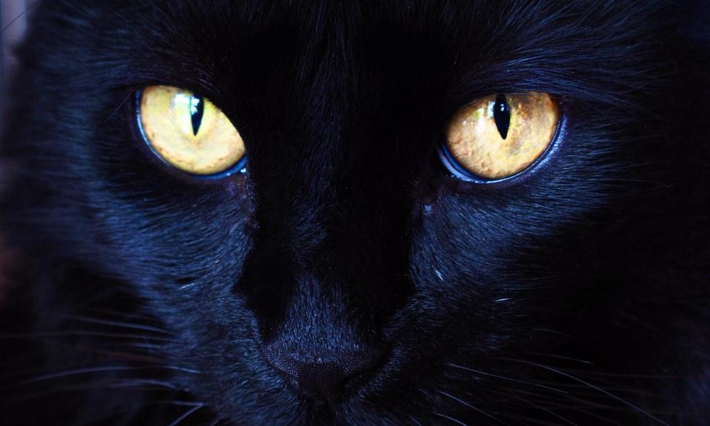 predator eyes