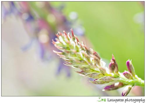 Blogflower5