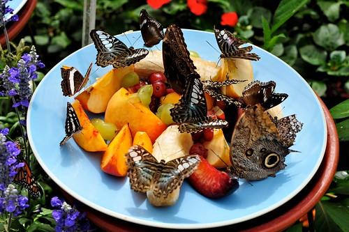 butterflies-Brooksde - 12
