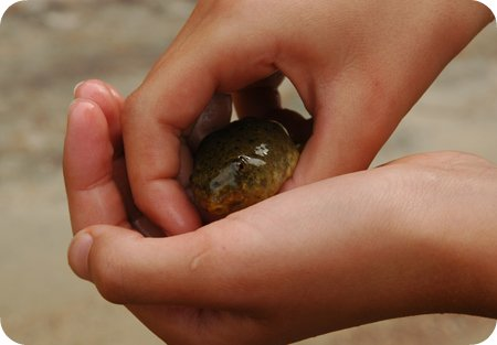 huge tadpole