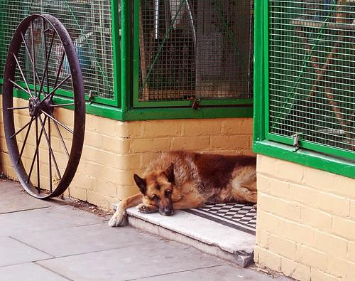 DOG TYRED par ihughes22