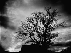 winterscape #9 (mugley) Tags: roof winter sunset sky blackandwhite bw building tree 120 film silhouette clouds mediumformat dark iso800 645 moody fuji suburban bare branches grain australia melbourne 11 victoria d76 negative horror epson suburbs deciduous neopan400 polarizer 6x45 mamiya645 urbanlandscape redfilter westmelbourne polariser pushedonestop 25a v700 cloudage mamiya645protl m645 fujifilmneopan400 35mmf35sekorn eadespl