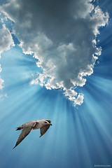 Freedom at Last (Ben Heine) Tags: light sun bird sunshine youth clouds sunrise freedom soleil fly high jump wings truth poetry poem peace force nikond70 earth pigeon dove air atmosphere swing jeunesse melody ciel libert harmony sing cumulus future hopes poet terre strength rays rise tomorrow digitalphoto oiseau libre climate stratosphere ether colombe paix deepblue cumulonimbus newday ailes espoir hauteur vrijheid vliegen edgeoftime voler vrij pote environement wolnosc petersquinn arodynamique benheine wolny thesuperbmasterpiece vigueur hubertlebizay hubzay infotheartisterycom highqualityanimals