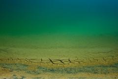 Tina (Furumaru) Tags: blue detalle detail macro green water up closeup mxico mexico pond sand cu close turquoise shore oaxaca gradient mexiko turquesa sanjuanaxiutla