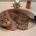 In the sink again