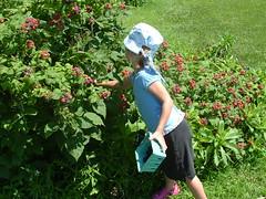 spencer berry farm