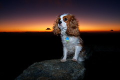 Watchdog (clarkmackey) Tags: sunset orange black purple poet cavalierkingcharlesspaniel craggydome lx3