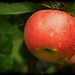 Red Apple Tree No. Five