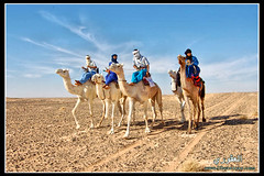 Camel race in the city of Ghadames ( [ Libya Photographer ]) Tags: old city race de an camel di libya altstadt camello deve ville vieille citt camelo  ghadames vecchia chameau libia libye  libi libyen     lbia libi  libija geogr    nc      lbija  liiba    lba