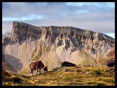 Monte Chipeta (Pisamundo Pirineos) Tags: zd1454mm pirineoaragones pirineo pyrénées otoño olympus ibon huesca e620 albertoaf3 acherito 2009 httpwwwpisamundopirineoscom
