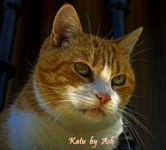 Katu / Gato / Cat (Asi75er) Tags: portrait cat photoshop canon eos retrato gato elements felino bizkaia euskalherria euskadi basquecountry paisvasco photoshopelements katu portuzaharra 400d canoneos400d awesomeshotaward 100arzorlessthan500crazycomments