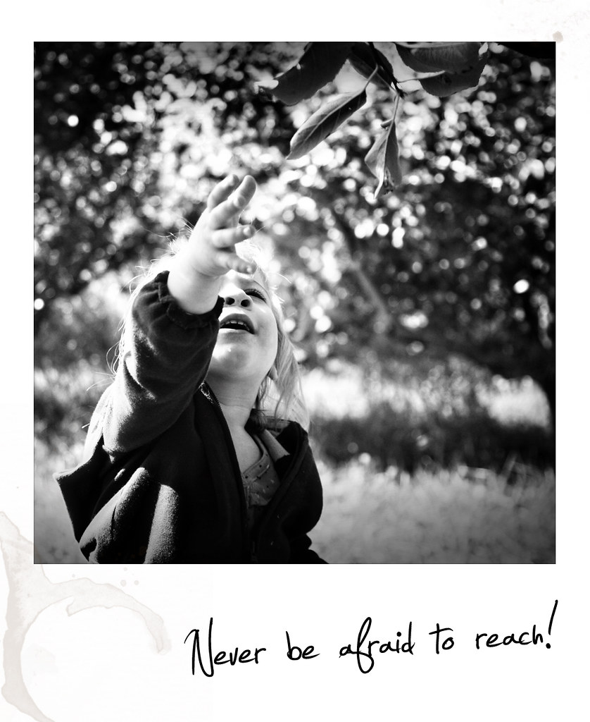 reach polaroid