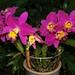 Pot. Bradford Craig Lundberg 'Trevor' (plant)